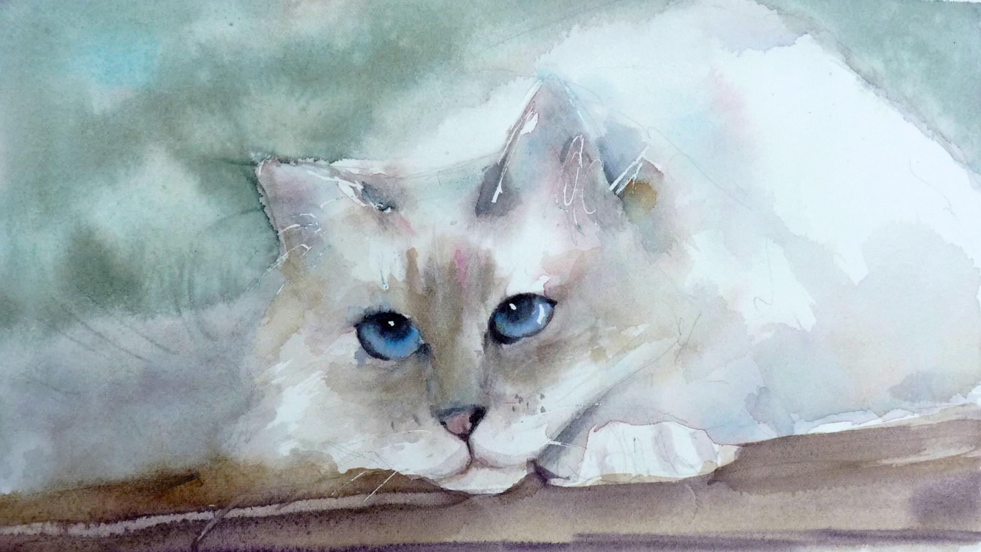 chat à poils blancs